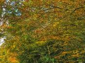 Great News Autumn Lovers Experts Predict Dazzling Display This Year, According Forestry Commission.