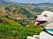 Douro Valley (Videos)