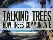Talking Trees: Trees Communicate
