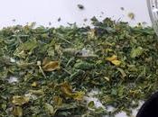 Make Kasuri Methi Home, Leaves Nutrition Facts