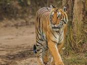 Best Wildlife Destinations India Couples