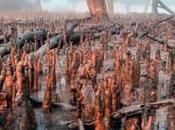 U.S. Dollars Financing Destruction World's Largest Mangrove Forest?