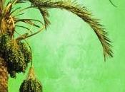Marthese Reviews Climbing Date Palm Shira Glassman