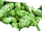 Full Story Behind Hops, Beer Production Love IPAs