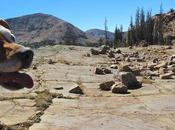 Geo-challenge: Range? Rock? Process?