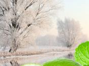 Winter Garden Fragrance