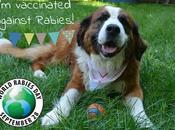 #WorldRabiesDay 2016: #vaccinate #pets Against #rabies