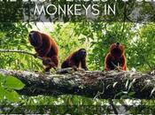 Best Places Monkeys Central America