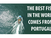 Best Fish World Comes from Portugal (extended Version)