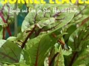 Sorrel Leaves Benefits Uses Skin, Hair Health