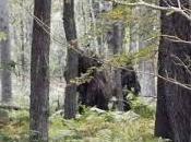 Bigfoot News October 2016