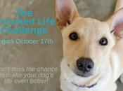 Join #PAW5EnrichedLifeChallenge