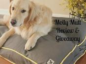 Upcycle Your Stuff With Molly Mutt Beds