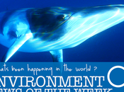 Whale Conservation Good, Minke: Environment News 16th-21st