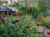 Front Garden First Year.