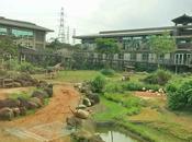 Wildlife Safari-cum-theme Park Adventure {Experience LeoFoo Resort Guanshi Village Theme Park}