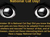 #October #NationalCatDay #BlackCat #Facts