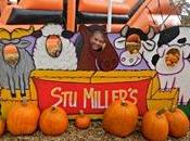 Pumpkin Patch Miller's Henderson/Las Vegas