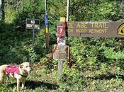 Wood Segment Trail