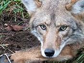 Attention Mexico: Urge Santa County Commissioners Restrict Trapping Federal Public Lands