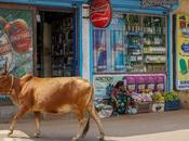 Month Goa: Finding Sweet Spot