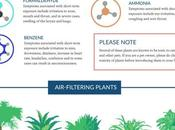 NASA Reveals Best Houseplants Filtering Your