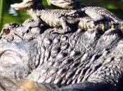Save Loxahatchee National Wildlife Refuge!