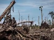 Deforestation: $906B Risk 'Domino Effect' Supply Chain