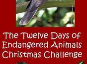Twelve Days Endangered Animals Challenge