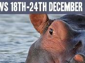 Environment News: Trump, Hippo's Robins Songs 18th-24th December 2016