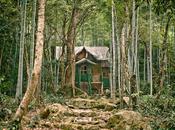 Bamboo Forest Near Nanchang, 2008