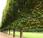 Rigid Gardens Paris