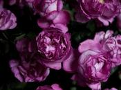 Yves Piaget Rose