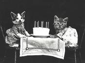 Kittens, Flickr Commons, Library Congress