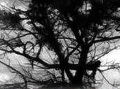 Left Hand Tree: Stories Spiritual Horror