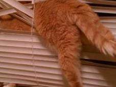 Tangled Cats Hate Blinds