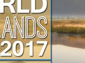 Wetlands Important