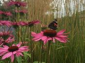 Follow Progress 'adopted' Chelsea Garden