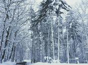 Swan Lake Diaries {snow Blues}