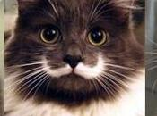 Most Famous Cats World