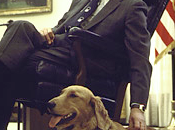 Presidential Golden Retrievers