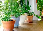 Everything Need Know About Houseplants (infographic)