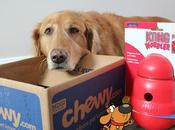 Chewy Delivers Kong Wobbler #ChewyInfluencer