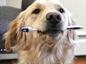 Dental Products Dogs
