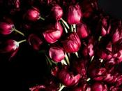 Extraordinary Tulips