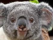 Job: Koala Data Research Technician