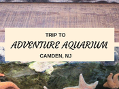 Trip Adventure Aquarium (vlog)