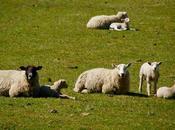Lambing Season Underway Hold Tightly Tread Lightly!