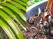 Canarius, Diversity Exotic Plants