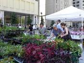 Chicago City Markets Make Fresh Return This Year